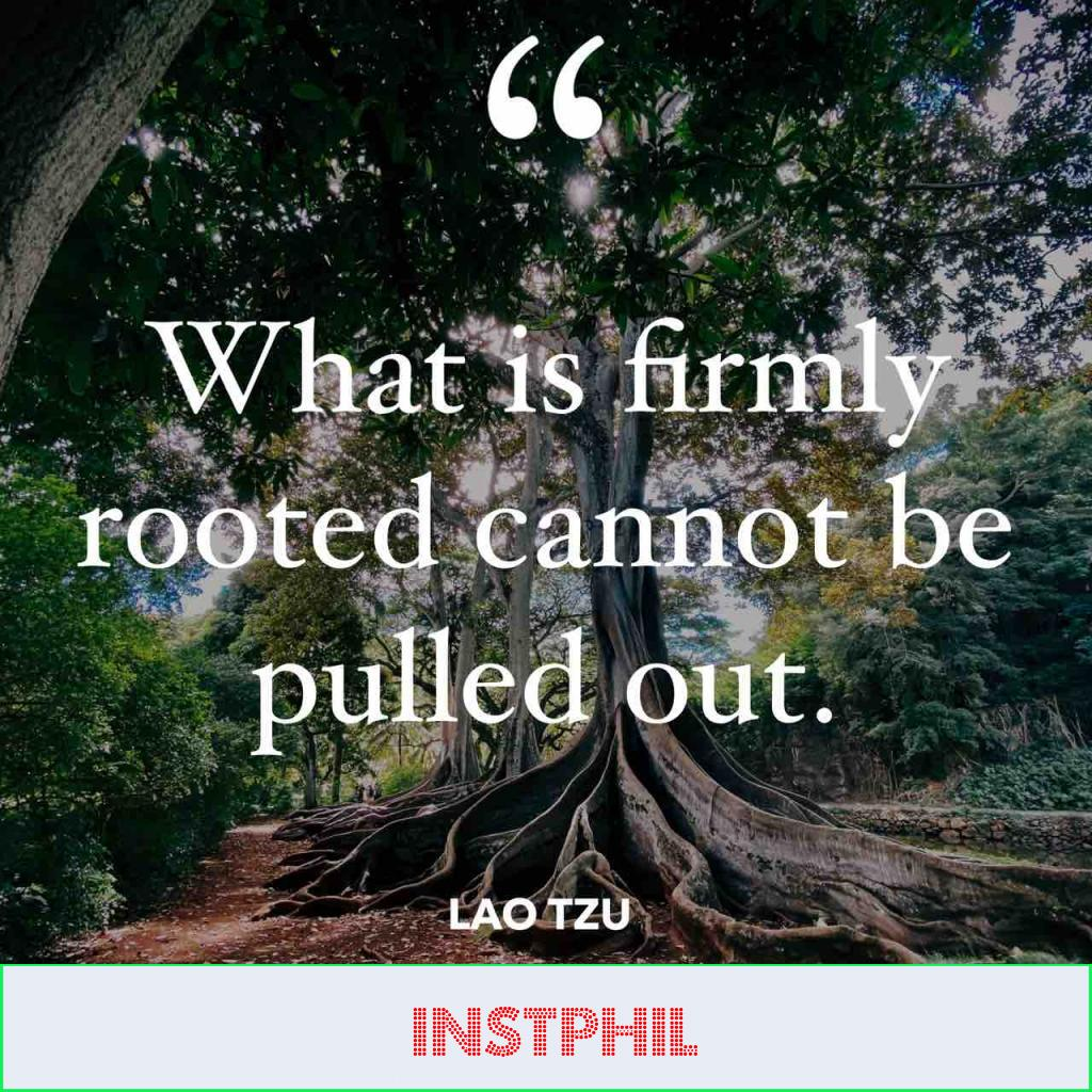 """Lao Tzu quote """"What is firmly rooted cannot be pulled out"""""""