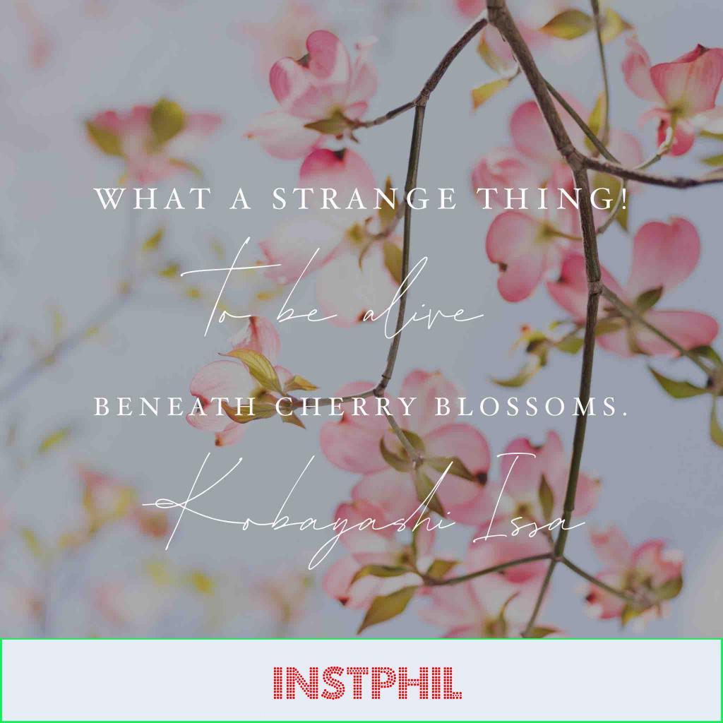 Kobayashi Issa spring quote