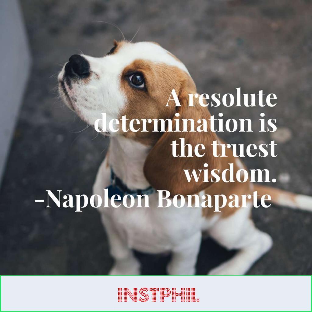 "Napoleon quote ""A resolute determination is the truest wisdom"""
